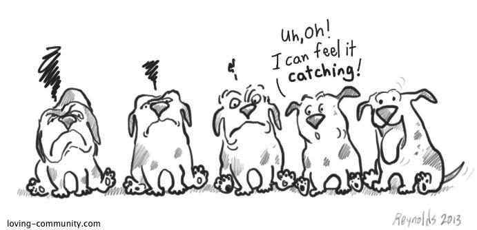 May32013-grumpy-dogs